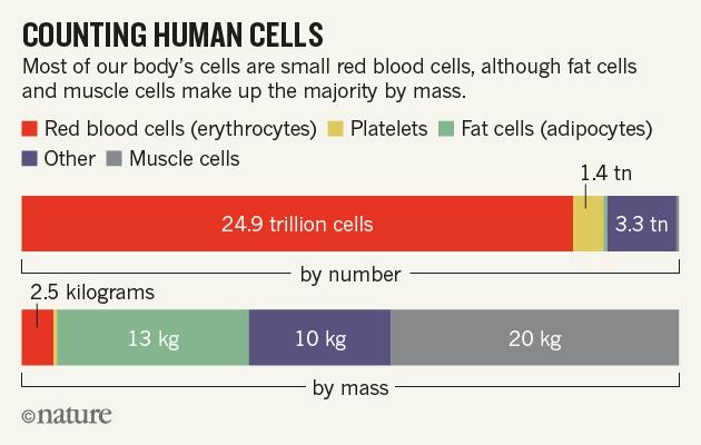 nature-human-cells-8.01.16-v2 (1)